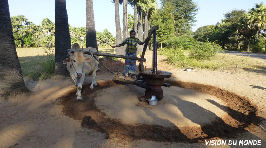 Moulin à sucre de palme en Birmanie