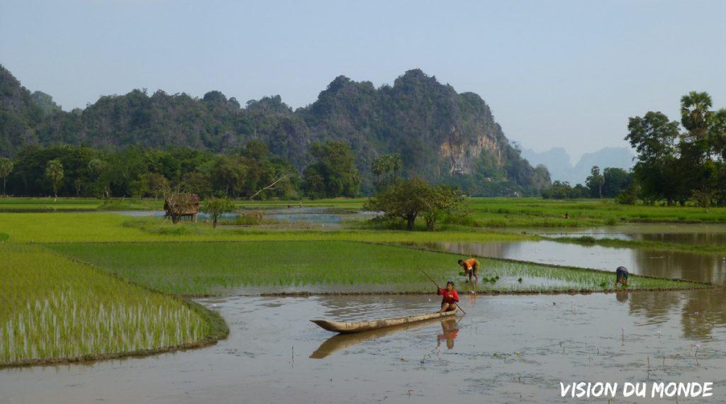 Rizières en Birmanie