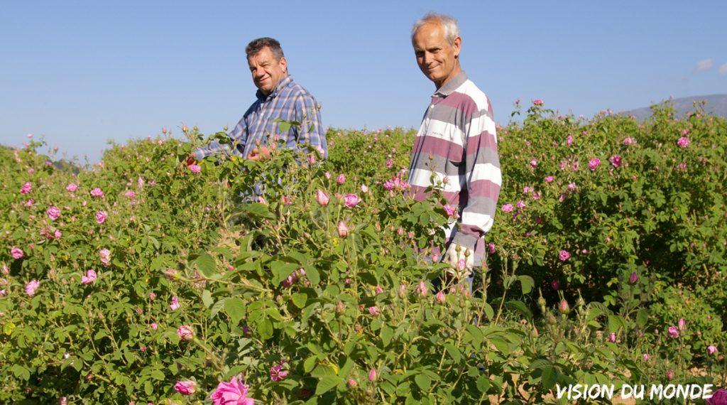 Bulgarie, récolte des roses