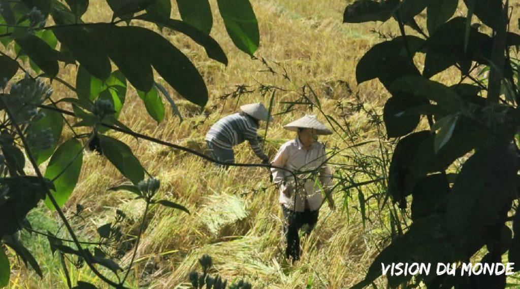 Laos travaux des champs