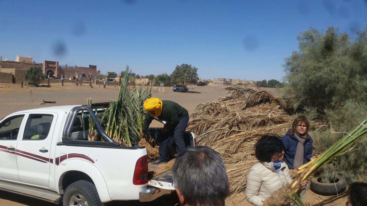 Plantation de palmiers dans l'oasis Hassilabiad
